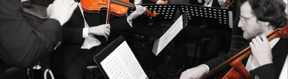 violini z